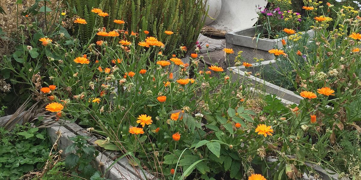 Ahorro en jardines
