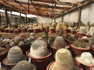 vivero-cactus-chile