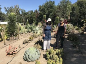 vivero-de-cactus