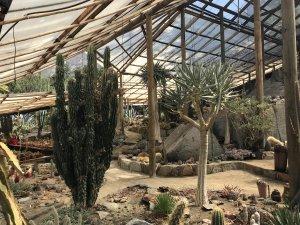cactus-y-suculentas