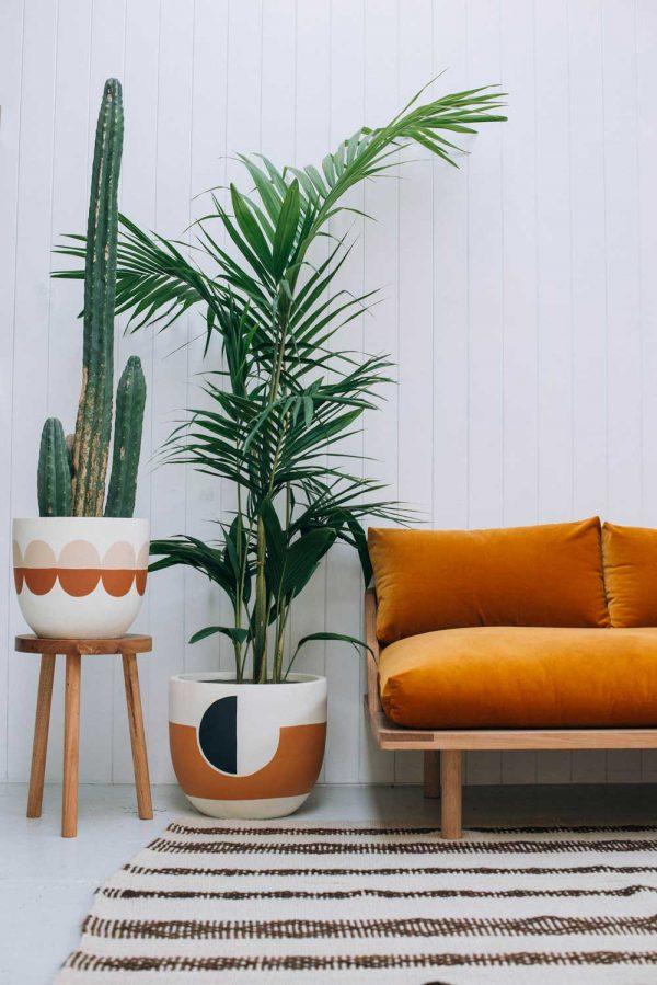 Dypsis-lutescens-plantas-de-interior-grandes-Tallo-Taller