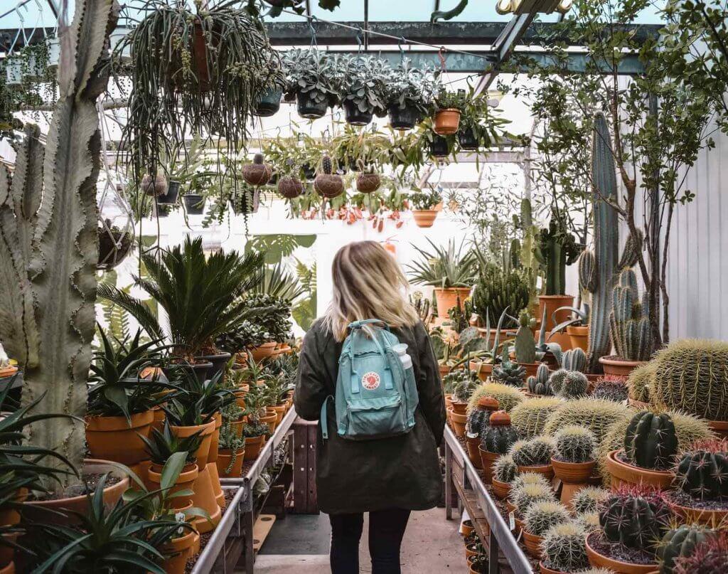 Como escoger entre los diferentes tipos de plantas de interior