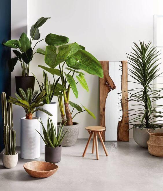 Diferentes tipos de maceteros para plantas de interior