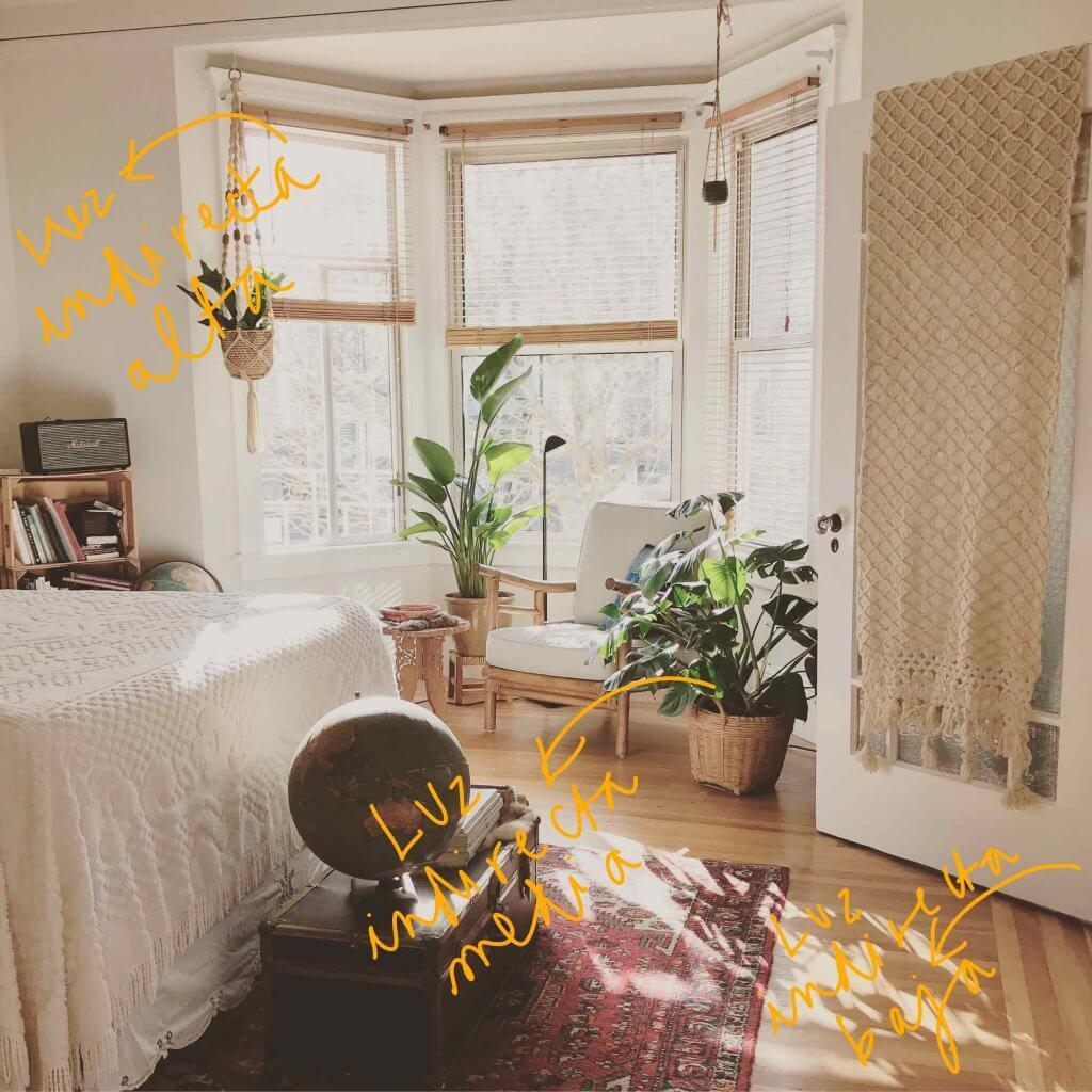 Identificar la luz y orientación de los espacios para plantas de interior