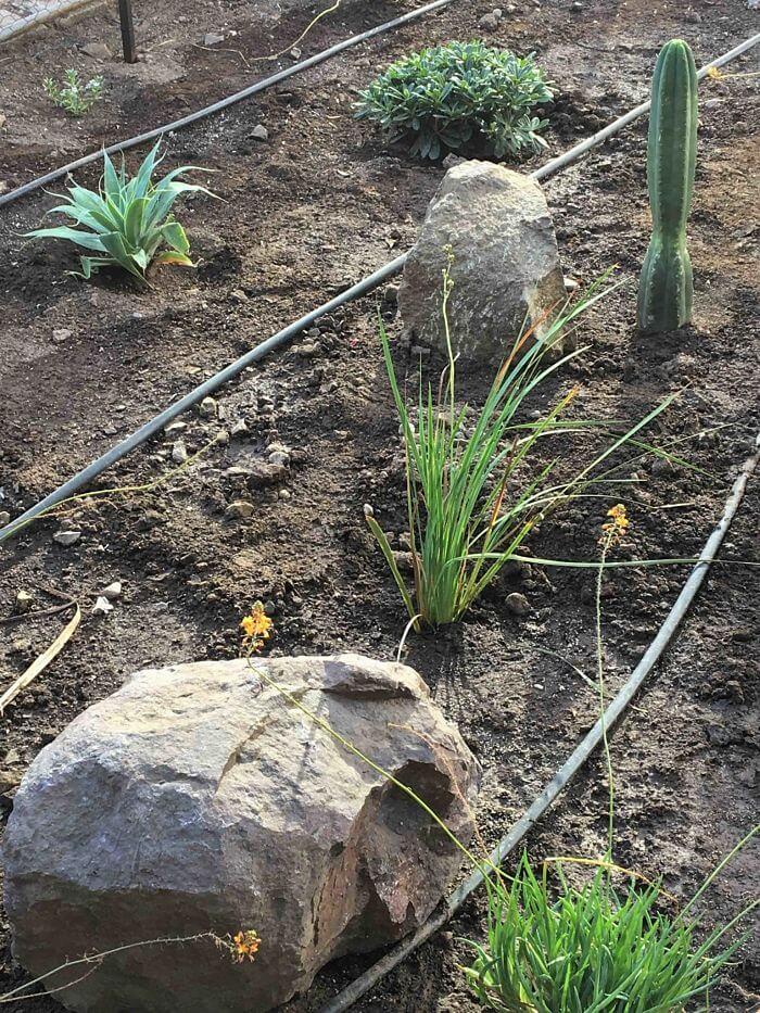 Jardín sustentable ubicado en el patio central de la fábrica. Se observan las líneas del sistema de riego inteligente, rocas, y plantas recién plantadas.