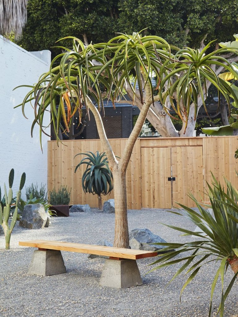 Jardín de piedra con especies esculturales como Aloe barberae.