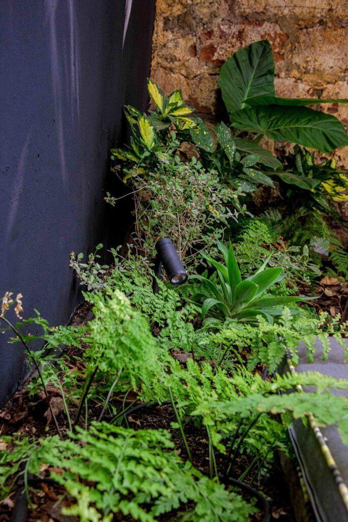 Jardín de bajo mantenimiento con muralla pintada de color gris oscuro para dar profundidad. Plantados unos Helechos perejil, Agave attenuata y luminaria negra en formato estaca.